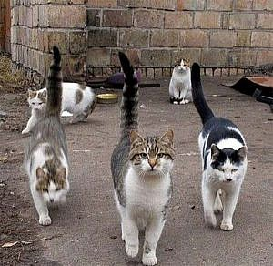 El control de colonias felinas: ética y legalidad