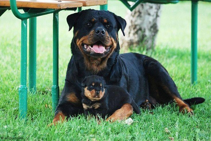 Perros potencialmente peligrosos, una consideración inadecuada y una ... 14c67cb20f