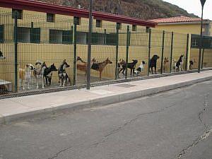 La protección animal y el ente público local en Cataluña