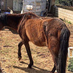 La importancia y las dificultades prácticas de las medidas cautelares en casos de maltrato animal