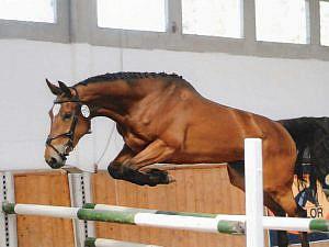 caballo-saltando