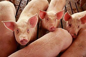 Bienestar animal y ganadería, una preocupación y una conciencia creciente
