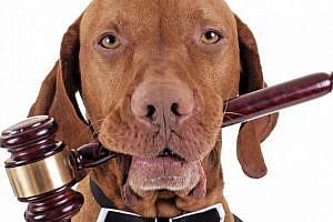 Jornadas sobre Derecho y Animales: Una oportunidad para el intercambio y la reflexión