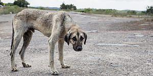 El delito de maltrato animal, la individualización del delito y la pena por cada animal objeto de maltrato