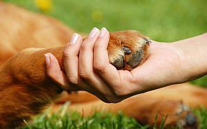 Colaboración ciudadana en temas de maltrato a los animales